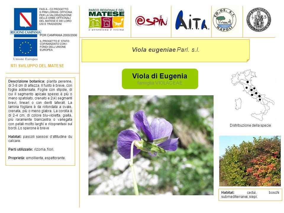 RTI SVILUPPO DEL MATESE Viola di Eugenia famiglia VIOLACEAE Viola eugeniae Parl. s.l. Descrizione botanica: pianta perenne, di 3-8 cm di altezza. Il f