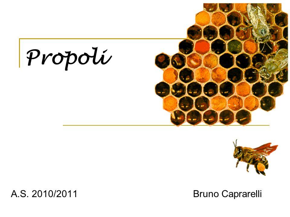 Propoli A.S. 2010/2011 Bruno Caprarelli