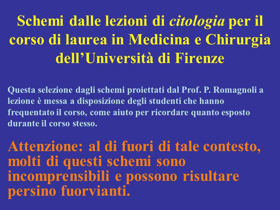 Schemi dalle lezioni di citologia per il corso di laurea in Medicina e Chirurgia dellUniversità di Firenze Questa selezione dagli schemi proiettati dal Prof.