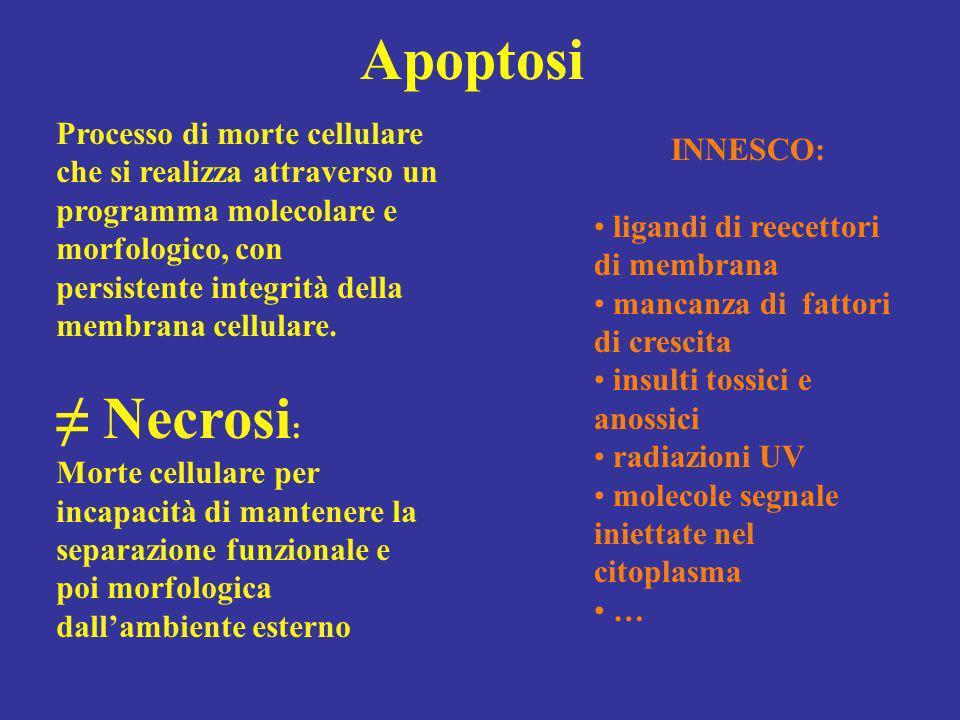 Apoptosi INNESCO: ligandi di reecettori di membrana mancanza di fattori di crescita insulti tossici e anossici radiazioni UV molecole segnale iniettat