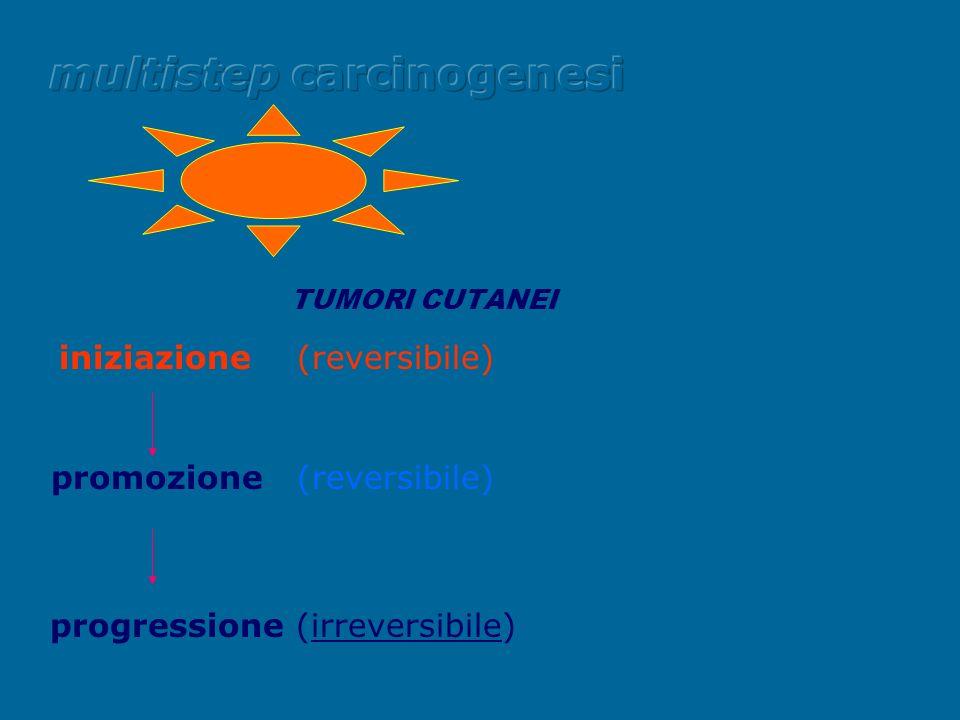 TUMORI CUTANEI iniziazione (reversibile) promozione (reversibile) progressione (irreversibile)