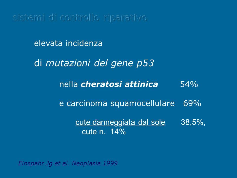 elevata incidenza di mutazioni del gene p53 nella cheratosi attinica 54% e carcinoma squamocellulare 69% cute danneggiata dal sole 38,5%, cute n. 14%
