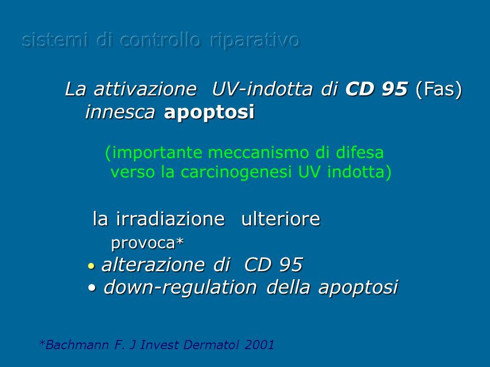 la irradiazione ulteriore provoca * provoca * alterazione di CD 95 alterazione di CD 95 down-regulation della apoptosi down-regulation della apoptosi.