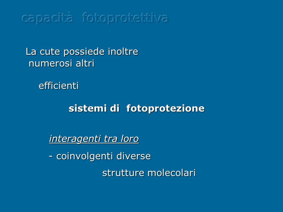 La cute possiede inoltre numerosi altri numerosi altri efficienti efficienti sistemi di fotoprotezione sistemi di fotoprotezione interagenti tra loro