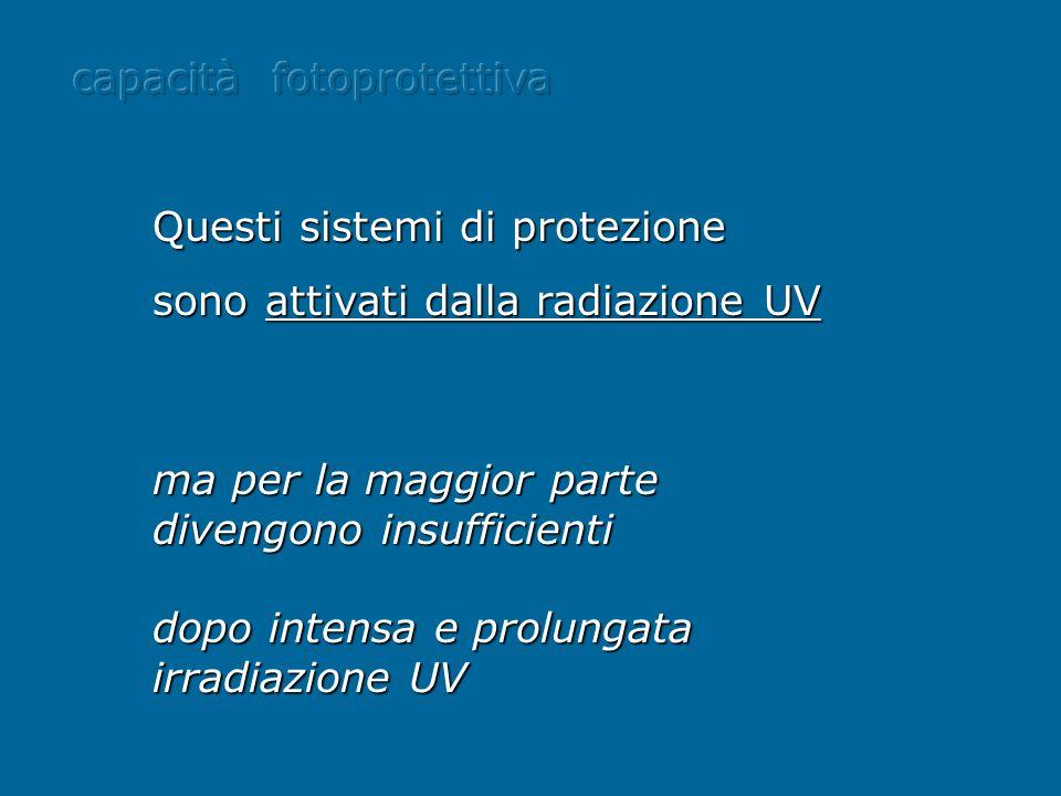 ma per la maggior parte divengono insufficienti dopo intensa e prolungata irradiazione UV Questi sistemi di protezione sono attivati dalla radiazione