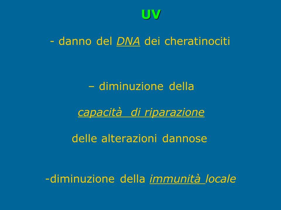 – diminuzione della capacità di riparazione delle alterazioni dannose - danno del DNA dei cheratinociti -diminuzione della immunità locale UV