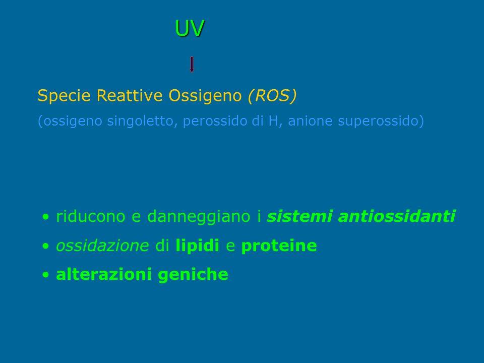 UV Specie Reattive Ossigeno (ROS) (ossigeno singoletto, perossido di H, anione superossido) riducono e danneggiano i sistemi antiossidanti ossidazione