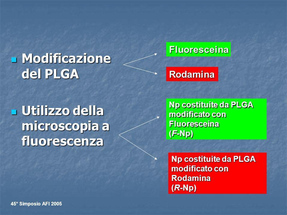 Modificazione del PLGA Modificazione del PLGA Utilizzo della microscopia a fluorescenza Utilizzo della microscopia a fluorescenza Fluoresceina Rodamin