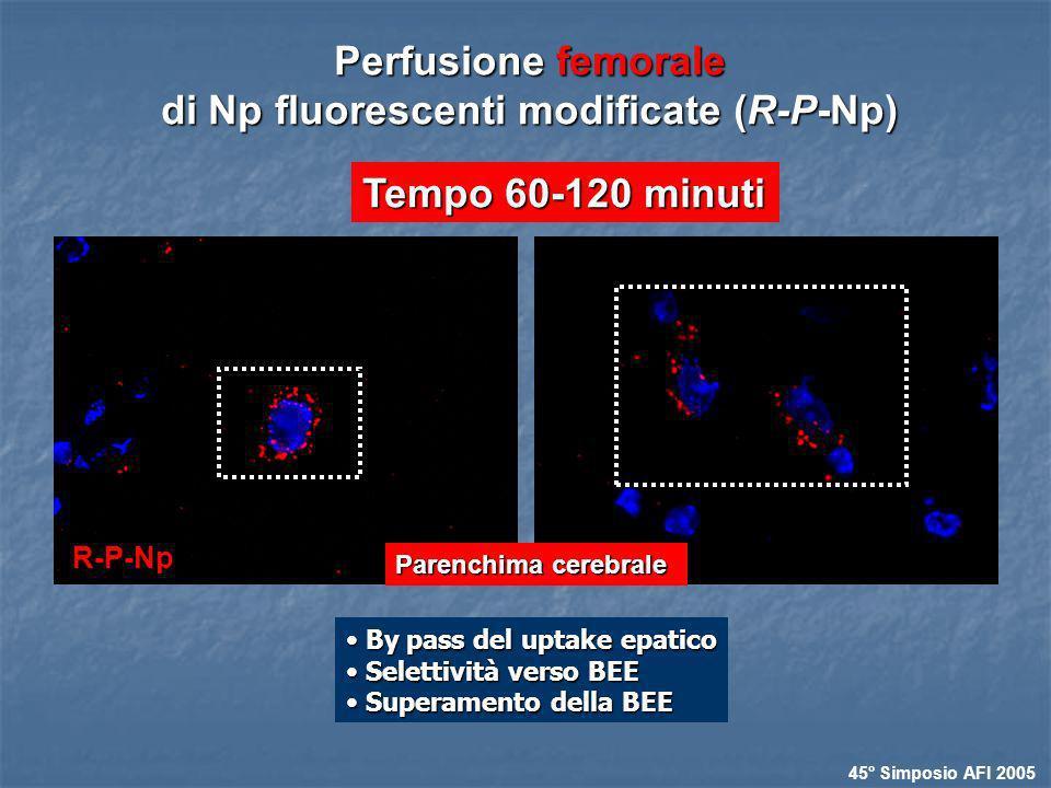 Tempo 60-120 minuti Perfusione femorale di Np fluorescenti modificate (R-P-Np) Parenchima cerebrale 45° Simposio AFI 2005 By pass del uptake epatico B