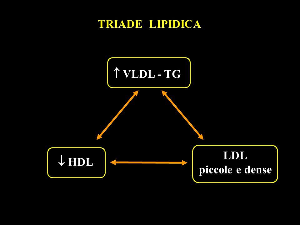 TRIADE LIPIDICA LDL piccole e dense HDL HDL VLDL - TG VLDL - TG