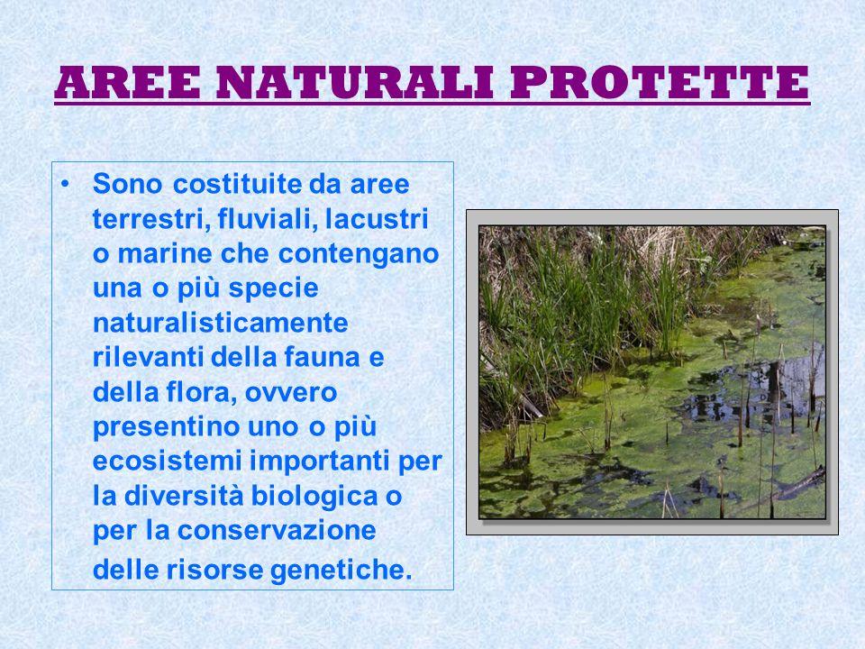 AREE NATURALI PROTETTE Sono costituite da aree terrestri, fluviali, lacustri o marine che contengano una o più specie naturalisticamente rilevanti del