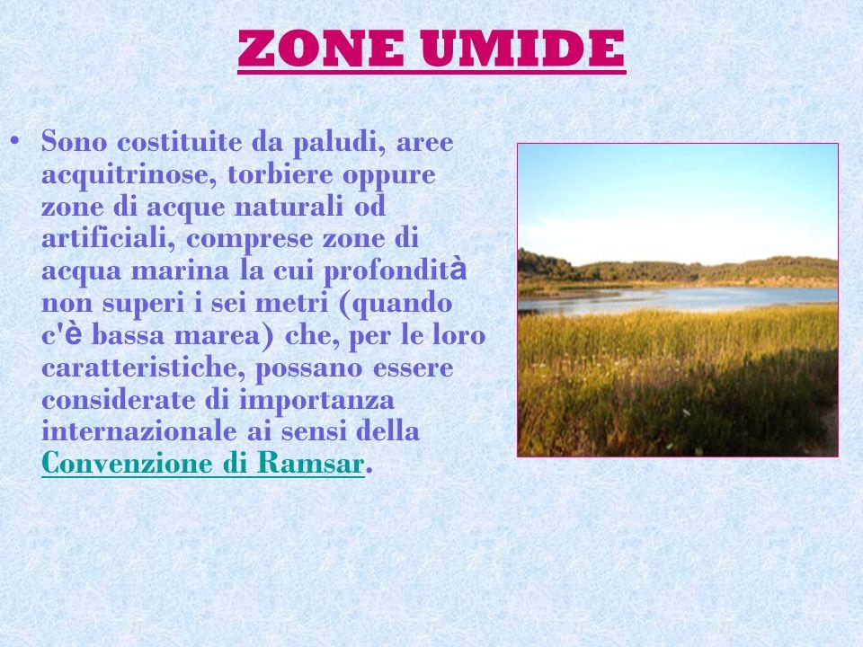 ZONE UMIDE Sono costituite da paludi, aree acquitrinose, torbiere oppure zone di acque naturali od artificiali, comprese zone di acqua marina la cui p