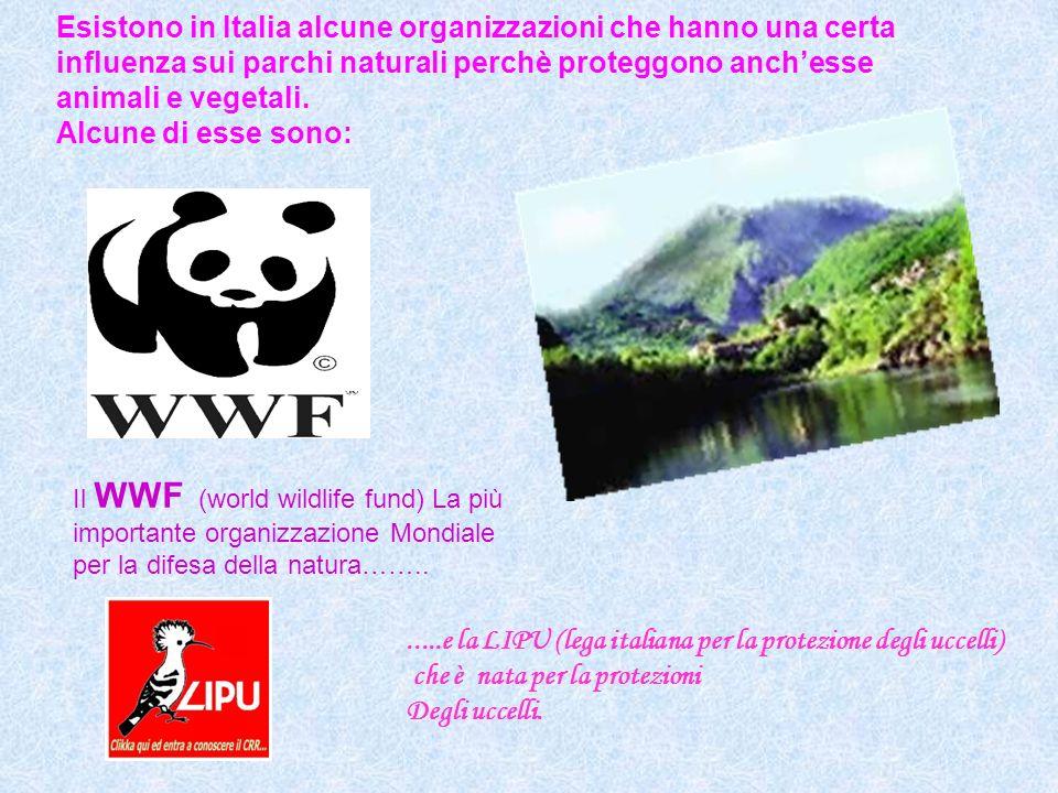 Esistono in Italia alcune organizzazioni che hanno una certa influenza sui parchi naturali perchè proteggono anchesse animali e vegetali. Alcune di es