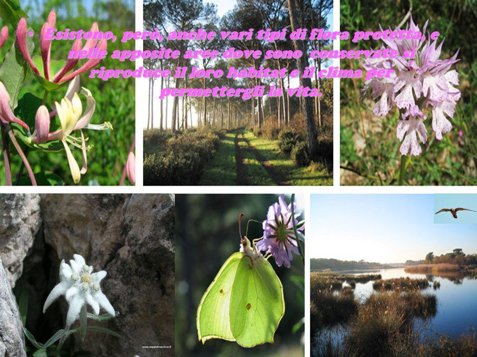 Esistono, però, anche vari tipi di flora protetta, e nelle apposite aree dove sono conservate si riproduce il loro habitat e il clima per permettergli