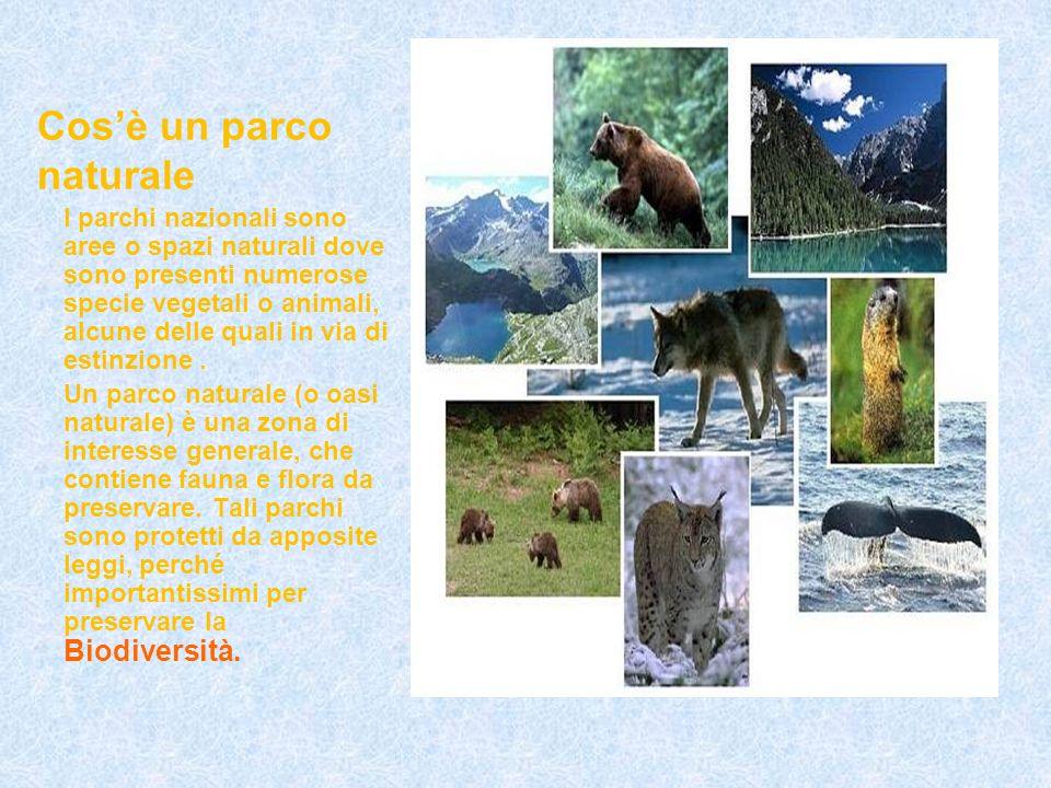 Cosè un parco naturale I parchi nazionali sono aree o spazi naturali dove sono presenti numerose specie vegetali o animali, alcune delle quali in via