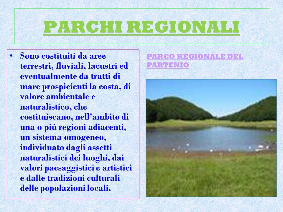 PARCHI REGIONALI Sono costituiti da aree terrestri, fluviali, lacustri ed eventualmente da tratti di mare prospicienti la costa, di valore ambientale