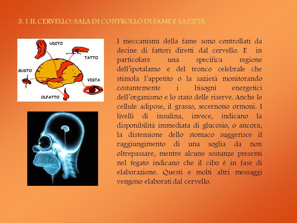 3.1 IL CERVELLO: SALA DI CONTROLLO DI FAME E SAZIETÀ I meccanismi della fame sono controllati da decine di fattori diretti dal cervello. E in particol
