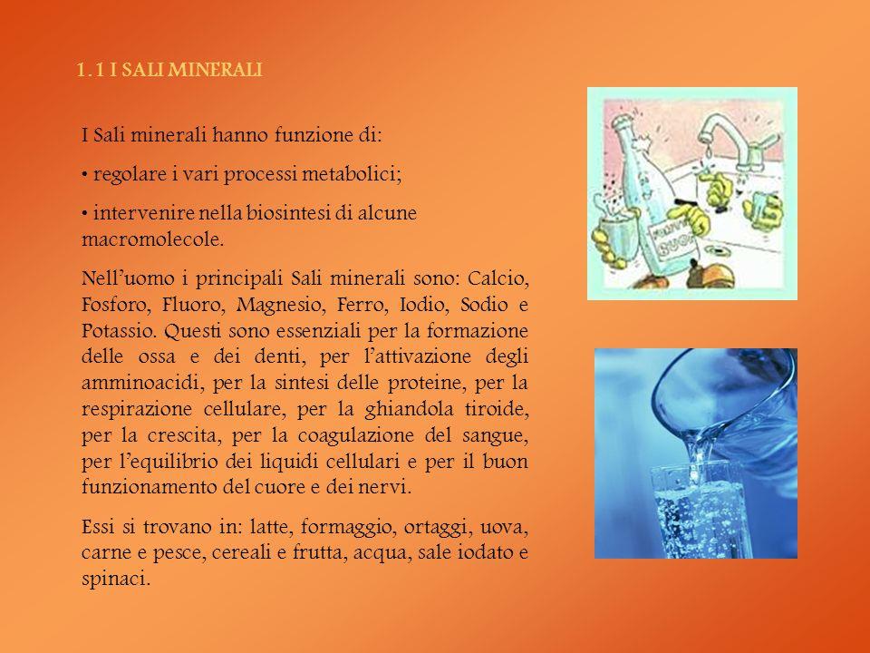 1.1 I SALI MINERALI I Sali minerali hanno funzione di: regolare i vari processi metabolici; intervenire nella biosintesi di alcune macromolecole. Nell