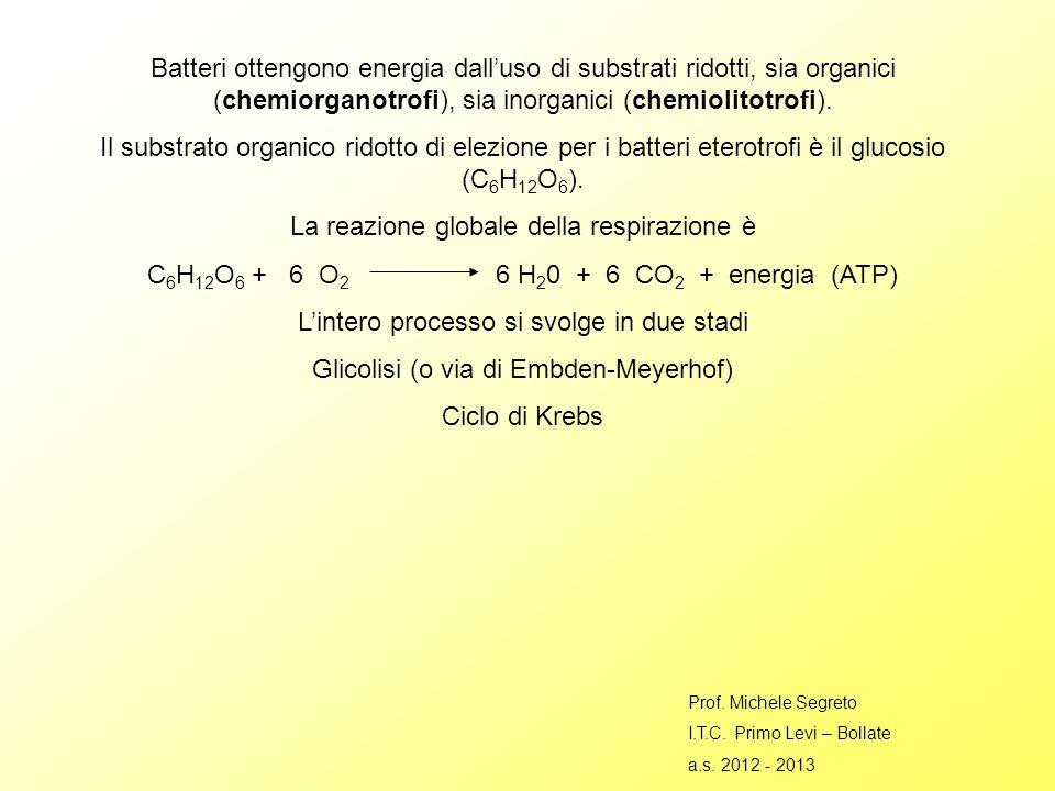 Batteri ottengono energia dalluso di substrati ridotti, sia organici (chemiorganotrofi), sia inorganici (chemiolitotrofi).