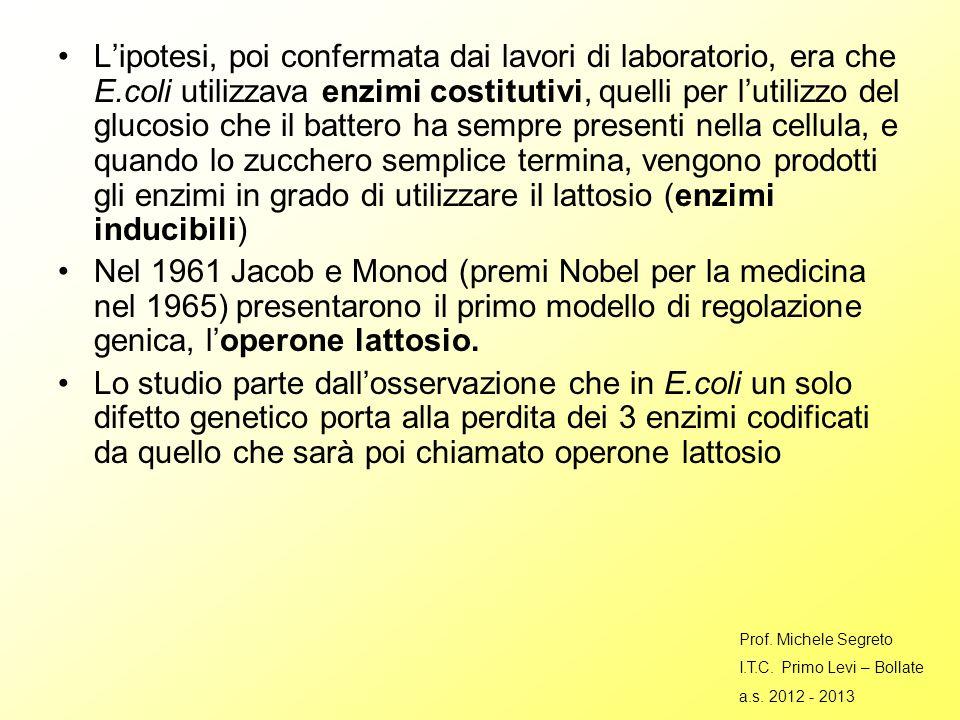 Lipotesi, poi confermata dai lavori di laboratorio, era che E.coli utilizzava enzimi costitutivi, quelli per lutilizzo del glucosio che il battero ha sempre presenti nella cellula, e quando lo zucchero semplice termina, vengono prodotti gli enzimi in grado di utilizzare il lattosio (enzimi inducibili) Nel 1961 Jacob e Monod (premi Nobel per la medicina nel 1965) presentarono il primo modello di regolazione genica, loperone lattosio.