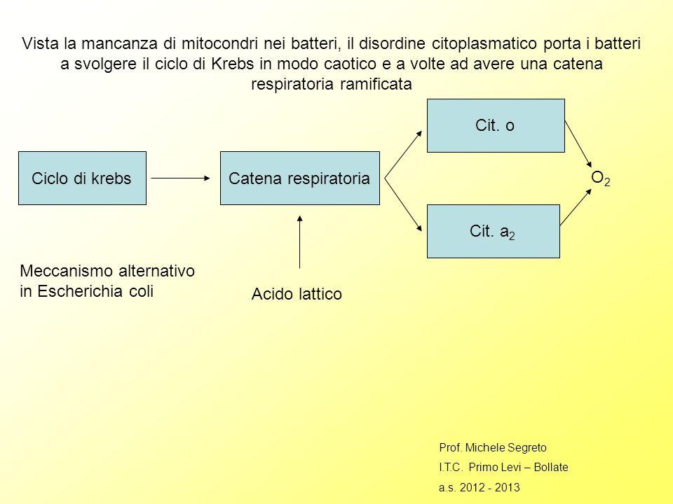 Vista la mancanza di mitocondri nei batteri, il disordine citoplasmatico porta i batteri a svolgere il ciclo di Krebs in modo caotico e a volte ad avere una catena respiratoria ramificata Ciclo di krebsCatena respiratoria Cit.