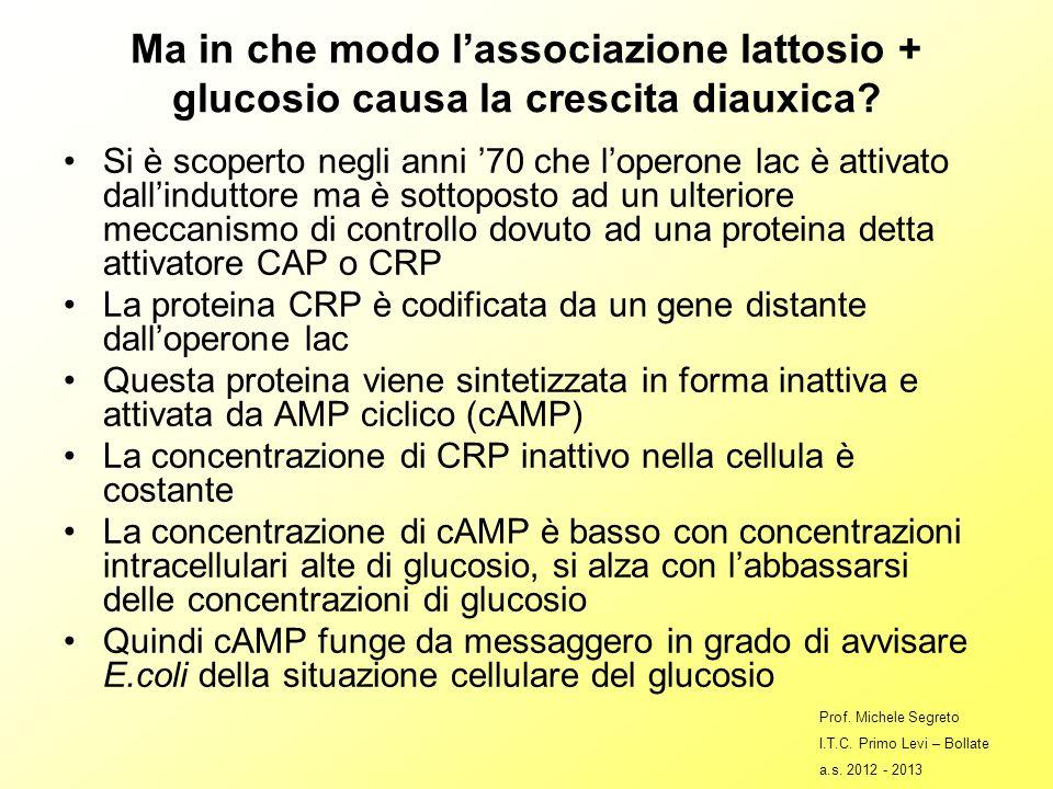 Ma in che modo lassociazione lattosio + glucosio causa la crescita diauxica.