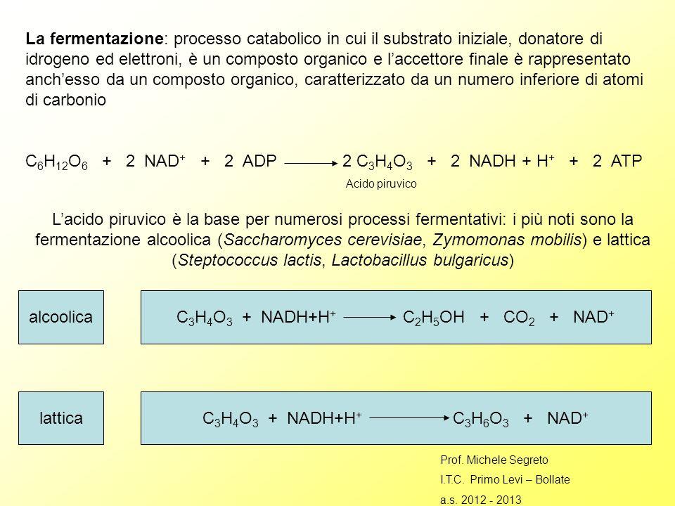 La fermentazione: processo catabolico in cui il substrato iniziale, donatore di idrogeno ed elettroni, è un composto organico e laccettore finale è rappresentato anchesso da un composto organico, caratterizzato da un numero inferiore di atomi di carbonio C 6 H 12 O 6 + 2 NAD + + 2 ADP 2 C 3 H 4 O 3 + 2 NADH + H + + 2 ATP Acido piruvico Lacido piruvico è la base per numerosi processi fermentativi: i più noti sono la fermentazione alcoolica (Saccharomyces cerevisiae, Zymomonas mobilis) e lattica (Steptococcus lactis, Lactobacillus bulgaricus) alcoolica lattica C 3 H 4 O 3 + NADH+H + C 2 H 5 OH + CO 2 + NAD + C 3 H 4 O 3 + NADH+H + C 3 H 6 O 3 + NAD + Prof.