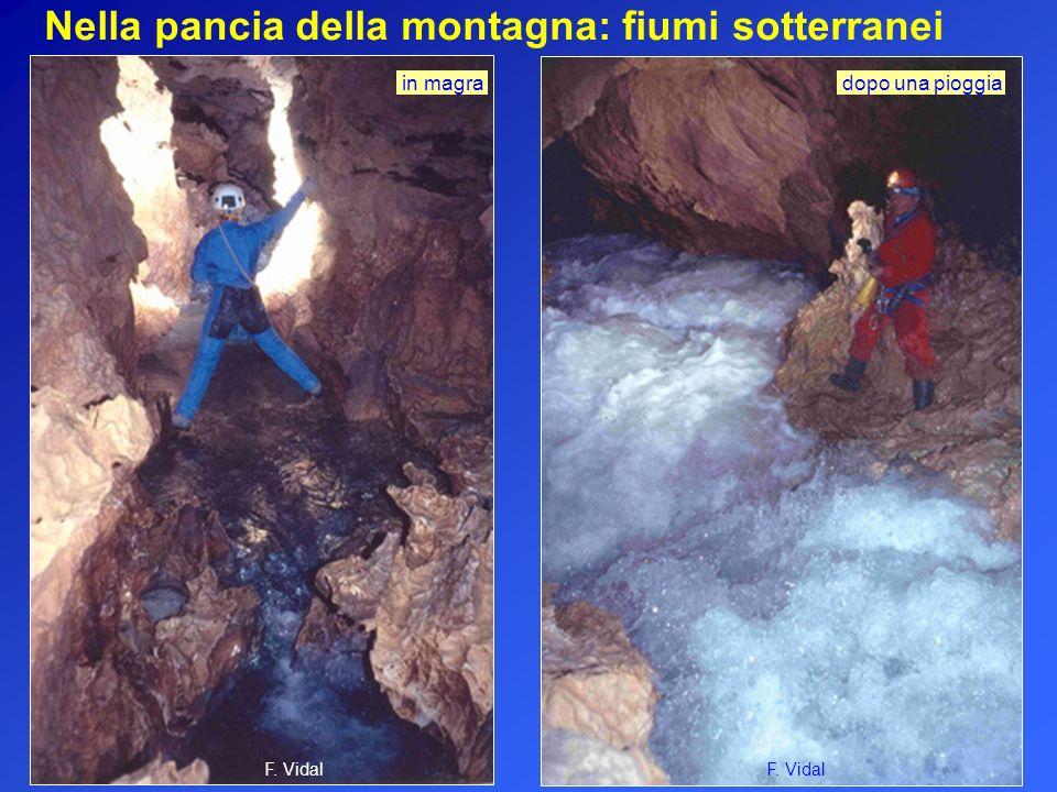 Nella pancia della montagna: fiumi sotterranei F. Vidal in magra dopo una pioggia F. Vidal