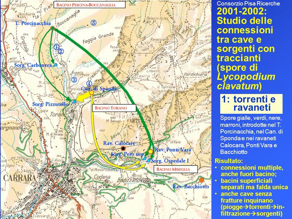 2001-2002: Studio delle connessioni tra cave e sorgenti con traccianti (spore di Lycopodium clavatum) Spore gialle, verdi, nere, marroni, introdotte n