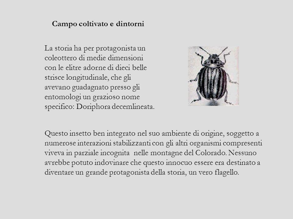 La storia ha per protagonista un coleottero di medie dimensioni con le elitre adorne di dieci belle strisce longitudinale, che gli avevano guadagnato presso gli entomologi un grazioso nome specifico: Doriphora decemlineata.