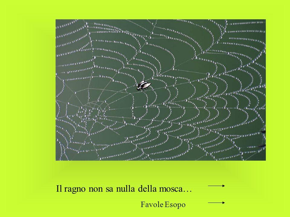 Il ragno non sa nulla della mosca… Favole Esopo