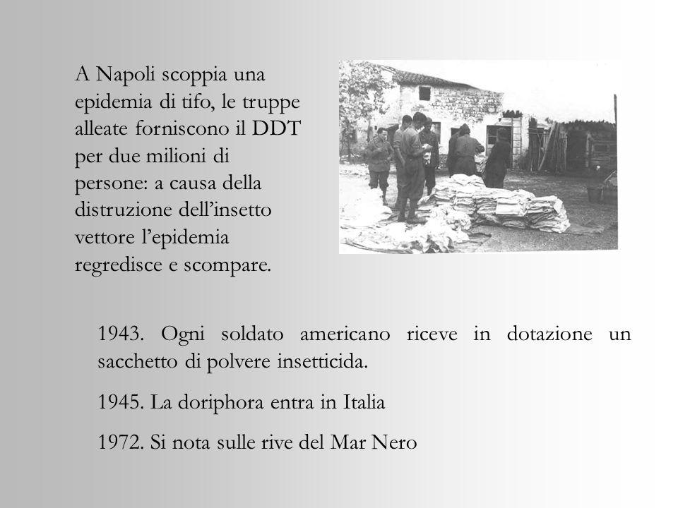 1943. Ogni soldato americano riceve in dotazione un sacchetto di polvere insetticida. 1945. La doriphora entra in Italia 1972. Si nota sulle rive del