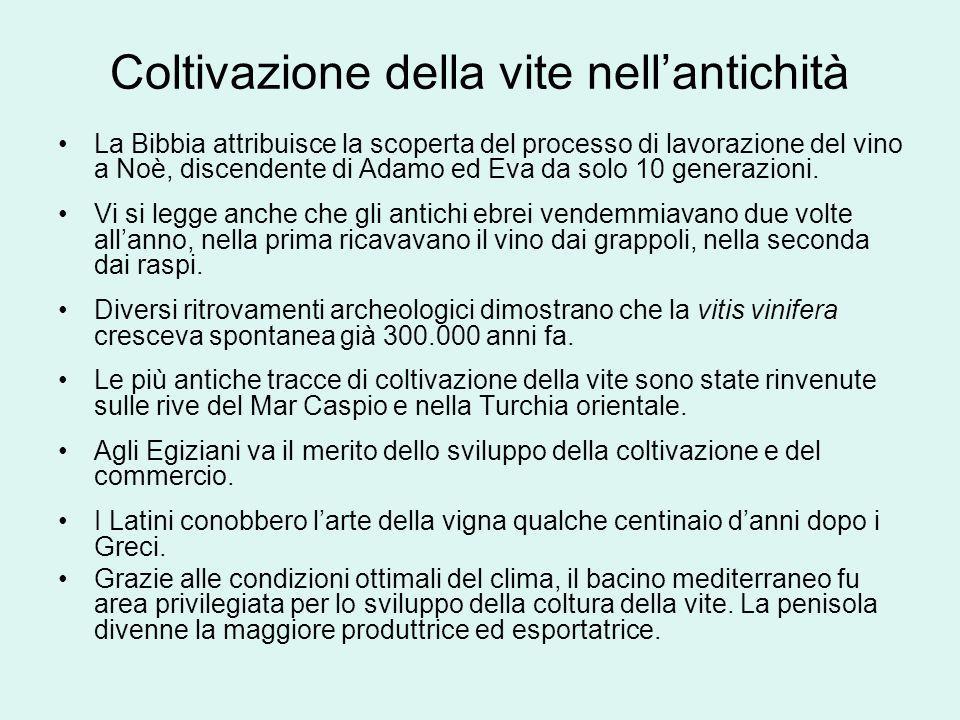Coltivazione della vite nellantichità La Bibbia attribuisce la scoperta del processo di lavorazione del vino a Noè, discendente di Adamo ed Eva da sol