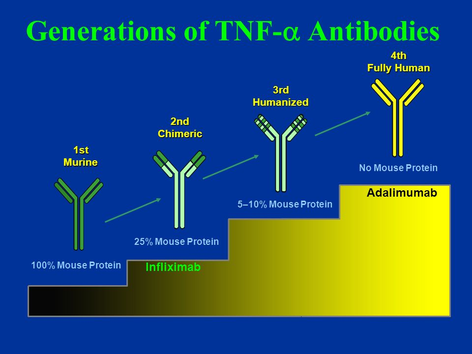 Generations of TNF- Antibodies Adalimumab 4th Fully Human 1stMurine 2ndChimeric 3rdHumanized 5–10% Mouse Protein No Mouse Protein 25% Mouse Protein 10