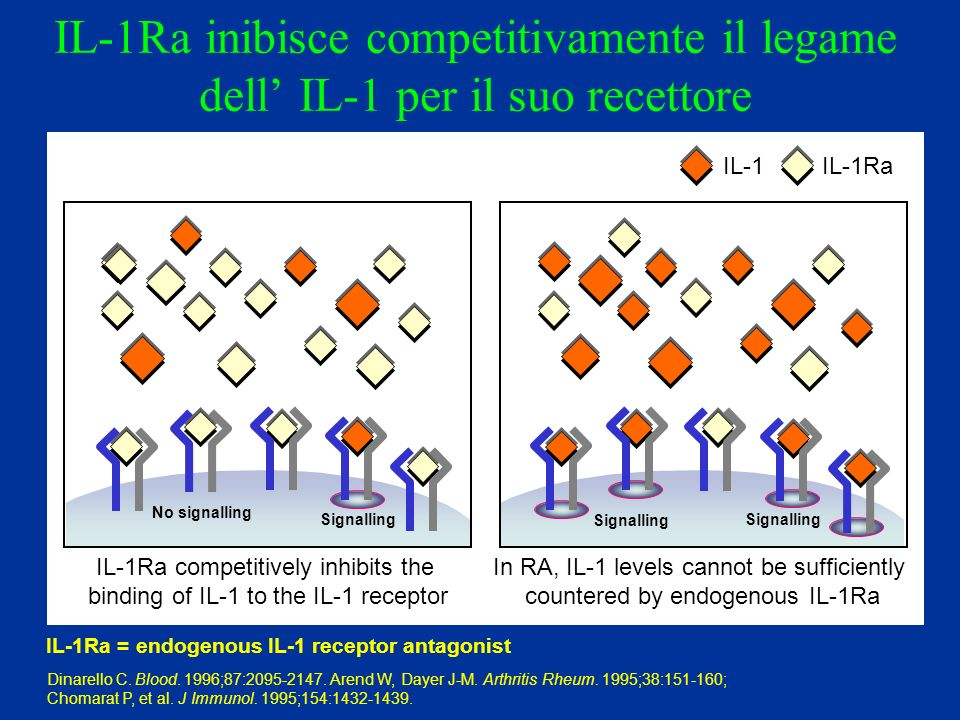 IL-1Ra inibisce competitivamente il legame dell IL-1 per il suo recettore IL-1IL-1Ra IL-1Ra competitively inhibits the binding of IL-1 to the IL-1 rec