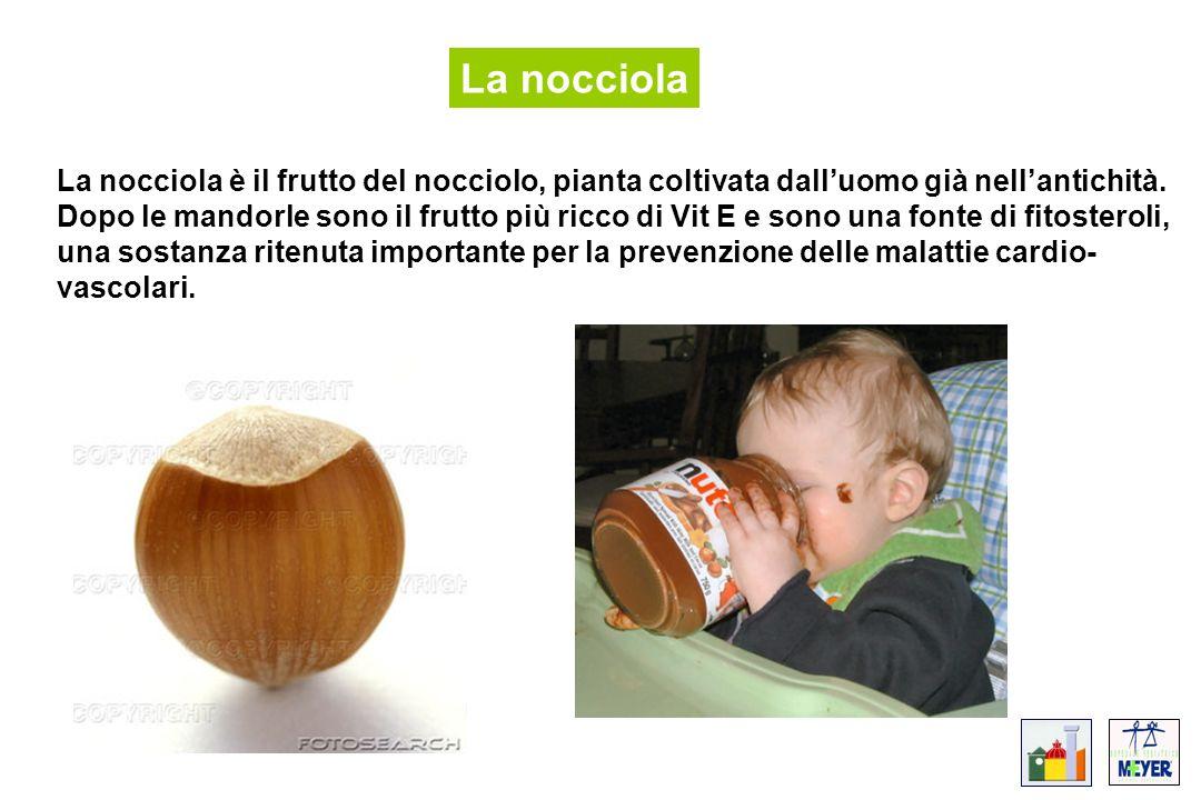 La nocciola La nocciola è il frutto del nocciolo, pianta coltivata dalluomo già nellantichità. Dopo le mandorle sono il frutto più ricco di Vit E e so