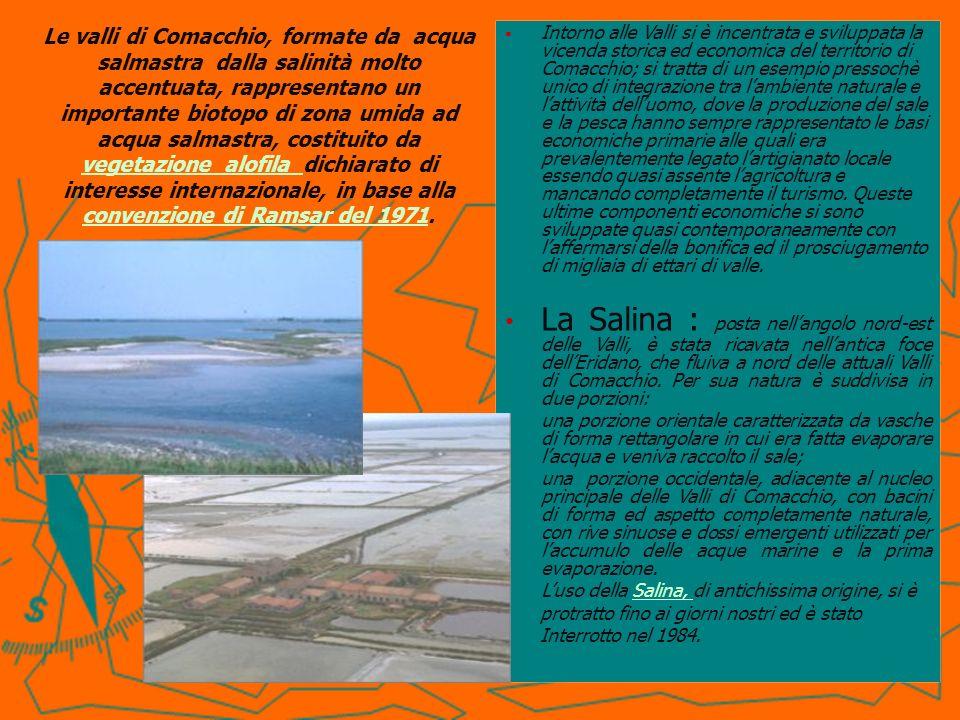 Le valli di Comacchio, formate da acqua salmastra dalla salinità molto accentuata, rappresentano un importante biotopo di zona umida ad acqua salmastr