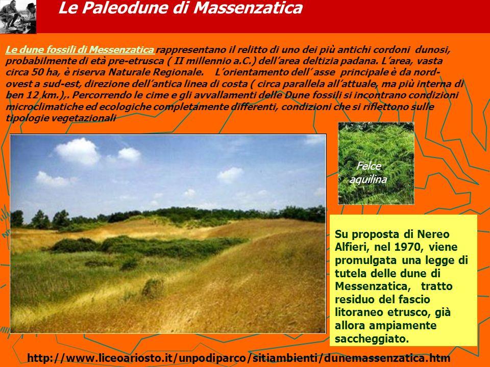 Le Paleodune di Massenzatica Su proposta di Nereo Alfieri, nel 1970, viene promulgata una legge di tutela delle dune di Messenzatica, tratto residuo d