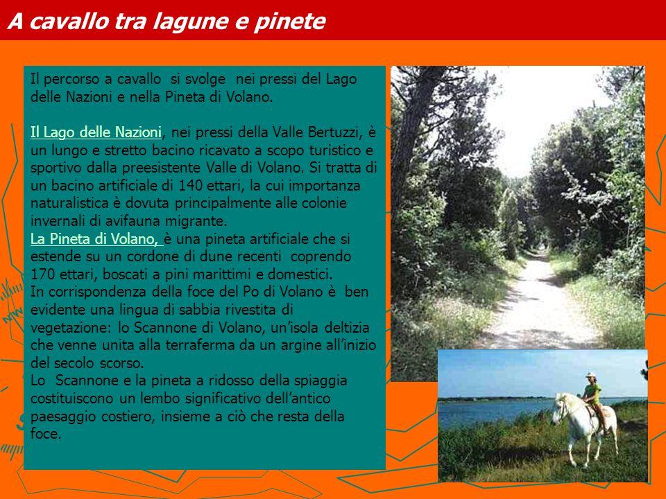 A cavallo tra lagune e pinete Il percorso a cavallo si svolge nei pressi del Lago delle Nazioni e nella Pineta di Volano. Il Lago delle NazioniIl Lago