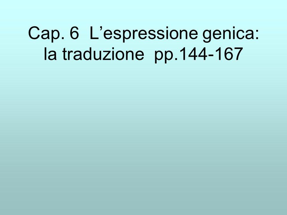 Cap. 6 Lespressione genica: la traduzione pp.144-167