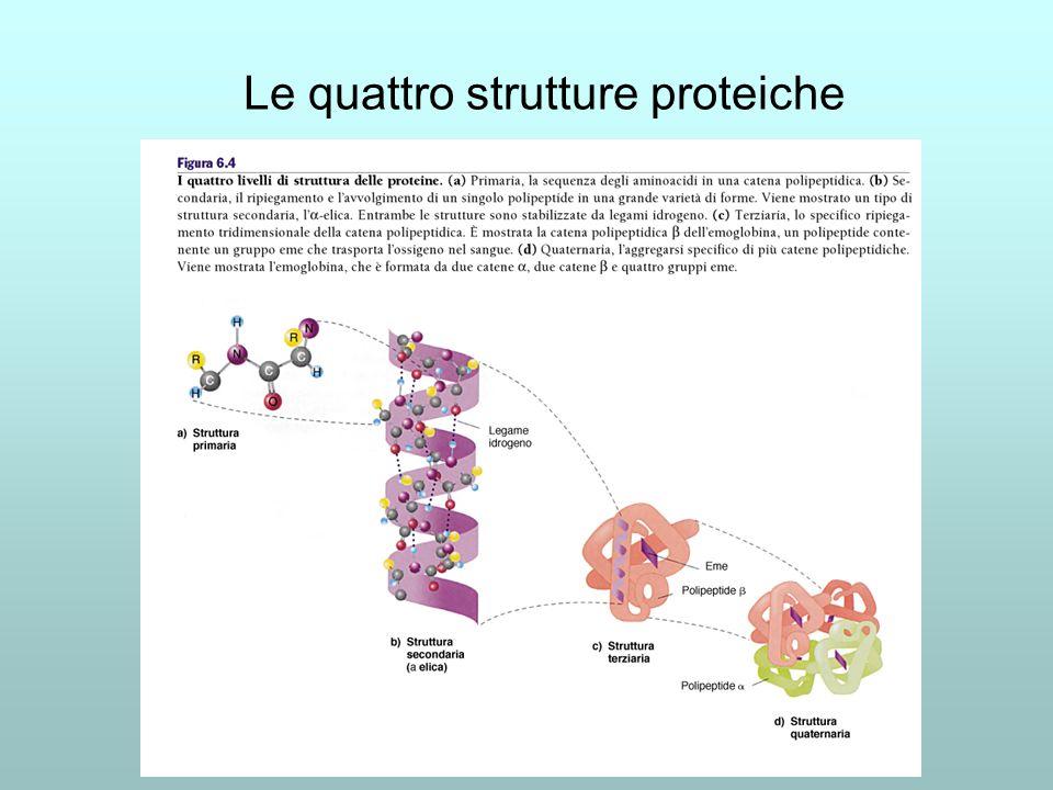 Le quattro strutture proteiche