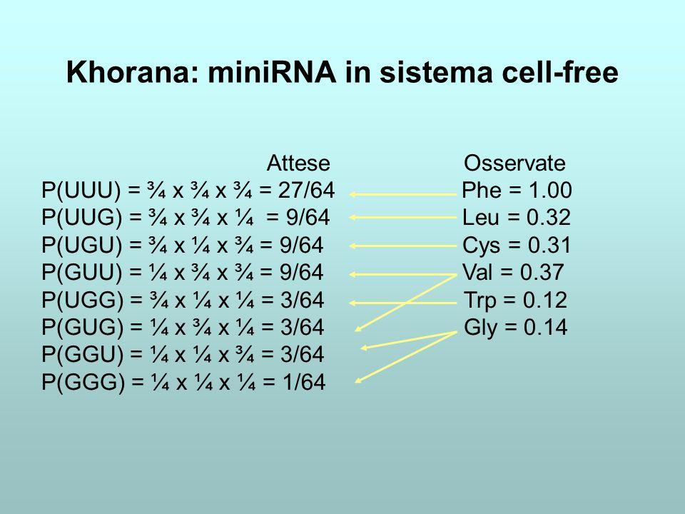 Khorana: miniRNA in sistema cell-free Attese Osservate P(UUU) = ¾ x ¾ x ¾ = 27/64 Phe = 1.00 P(UUG) = ¾ x ¾ x ¼ = 9/64 Leu = 0.32 P(UGU) = ¾ x ¼ x ¾ =