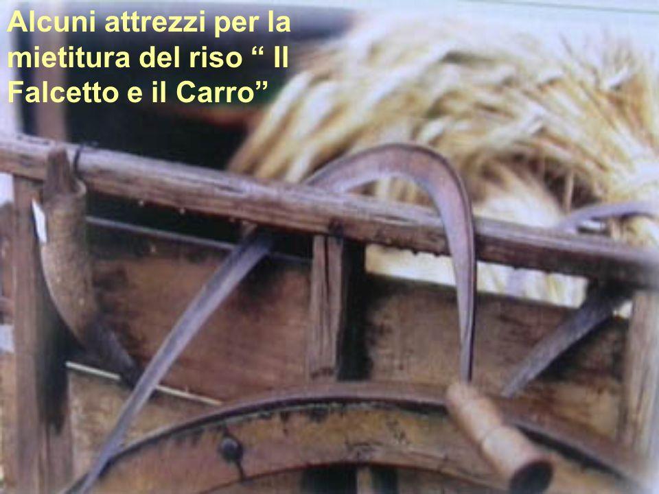 Alcuni attrezzi per la mietitura del riso Il Falcetto e il Carro