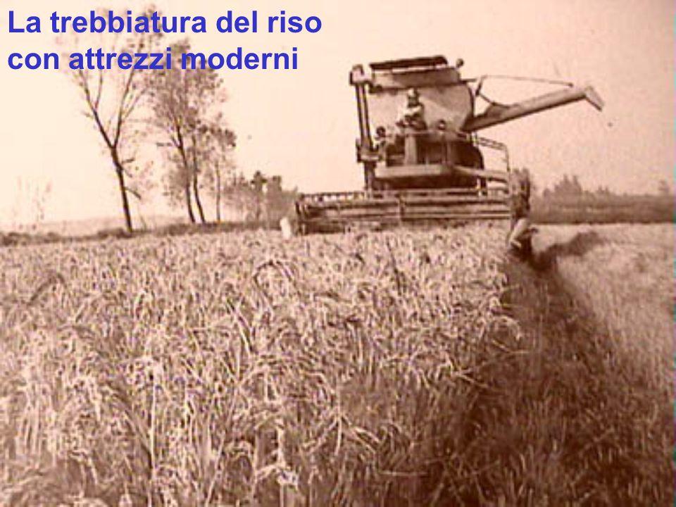 La trebbiatura del riso con attrezzi moderni