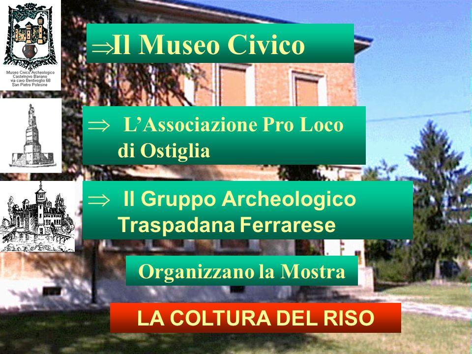 Il Museo Civico LAssociazione Pro Loco di Ostiglia Il Gruppo Archeologico Traspadana Ferrarese Organizzano la Mostra LA COLTURA DEL RISO
