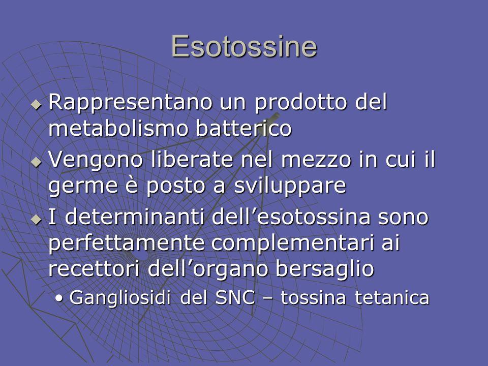 Esotossine Rappresentano un prodotto del metabolismo batterico Rappresentano un prodotto del metabolismo batterico Vengono liberate nel mezzo in cui i