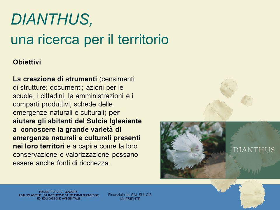 Dianthus mossanus, Bacch.& Brullo Il Dianthus mossanus (Bacch.
