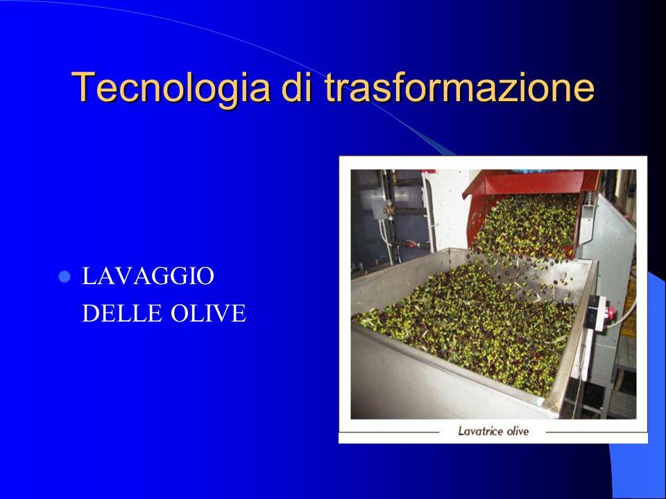 Tecnologia di trasformazione LAVAGGIO DELLE OLIVE