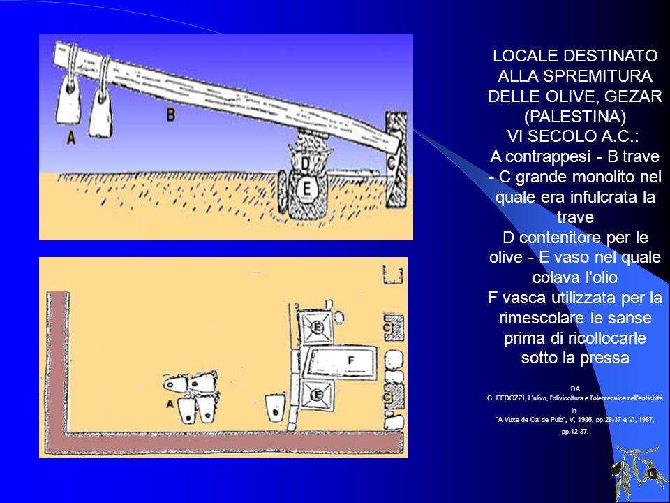 LOCALE DESTINATO ALLA SPREMITURA DELLE OLIVE, GEZAR (PALESTINA) VI SECOLO A.C.: A contrappesi - B trave - C grande monolito nel quale era infulcrata l