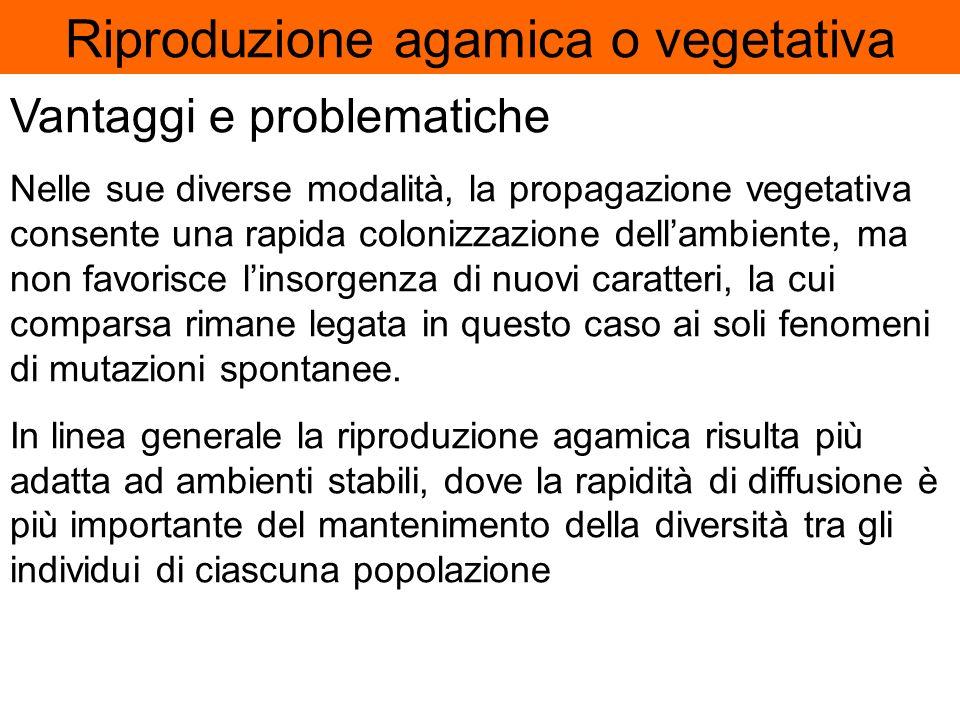 Luomo utilizza la propagazione vegetativa per moltiplicare le piante coltivate per mezzo di: 1. propaggini 2.Talee 3.Margotte 4.Innesti Grazie a quest